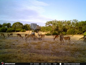 Rhino Deer at Feeder (1)